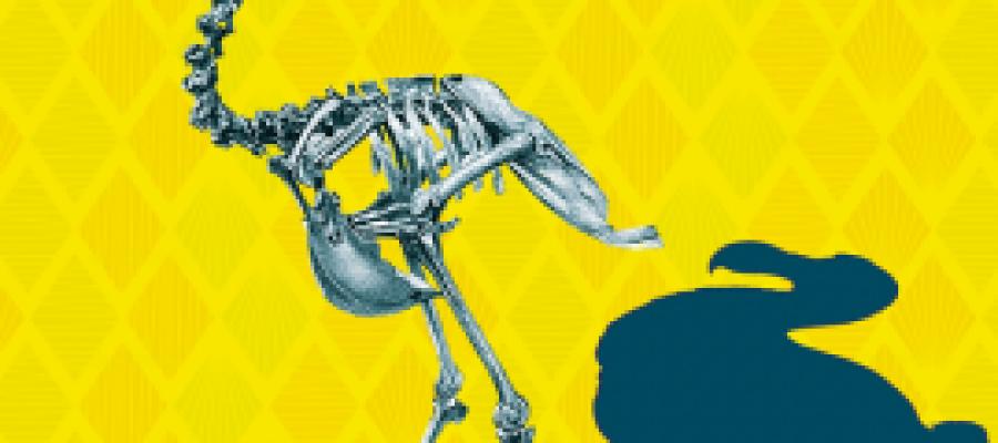 dodo-270x198
